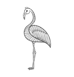 coloring page with flamingo bird entangle vector image