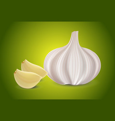 fresh whole garlic two cloves slices and garlic vector image