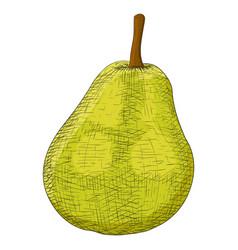 green pear sketch vector image