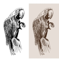 original artwork parrot black sketch drawing bird vector image