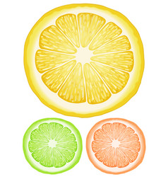 Three slices of lemon in different colors vector