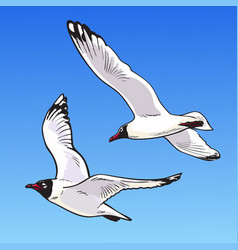 Two cartoon seagulls on a blue background sketch vector