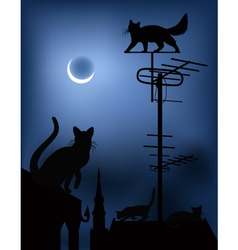 cats on the roofs in the night sky vector image