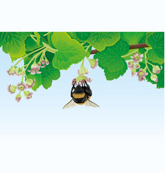 bumblebee on a flower and currant leaves vector image