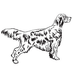 decorative standing portrait of english setter vector image