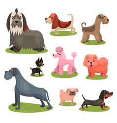 different breeds of dog set furry purebred human vector image
