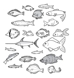 Different kinds of fish vector image