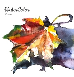 Hand painting watercolor autumn leaf vector