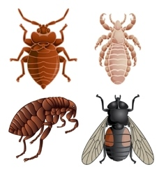 set icons with pests vector image