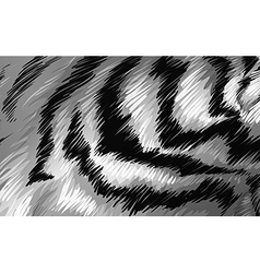 Tiger texture bw vector