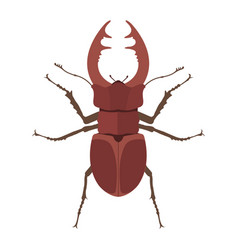 insect stag beetle icon flat isolated vector image