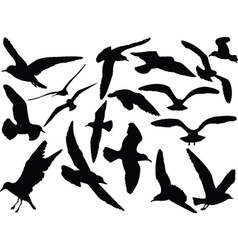 seagull collection - vector image