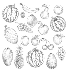 Delicious fresh harvested summer fruits sketches vector image vector image