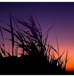 Sunset And Grass Silhouette vector image vector image