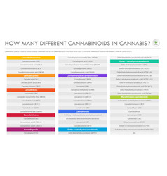 how many different cannabinoids in cannabis vector image