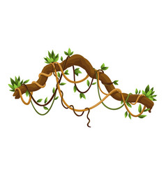 liana or jungle wild vine winding branches woody vector image