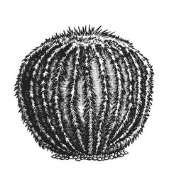 Round desert plant cactus ink hand drawn vector