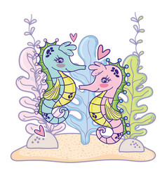 seahorses couple animals with hearts and seaweed vector image