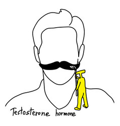 Testosterone grows facial hair vector