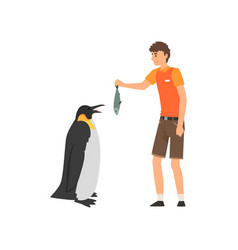 zoo worker feeding penguin fish professional vector image
