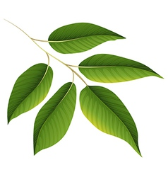 A plant with green leaves vector