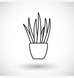 aloe vera thin line web icon vector image