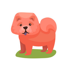 Chow chow dog purebred pet animal standing on vector