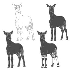 Set of black and white images with okapi vector