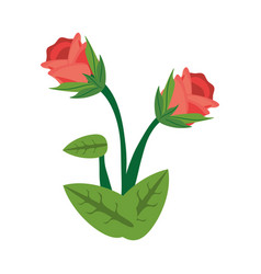 rose flower spring image vector image