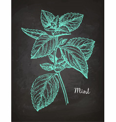 Chalk sketch of mint vector