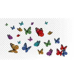 Flying butterflies colorful butterfly isolated on vector