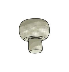 drawing mushroom vegetable nutrition food healthy vector image