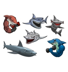 Angry grey white and hammerhead sharks cartoon vector image vector image