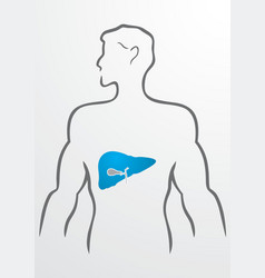 Liver and human body - vector