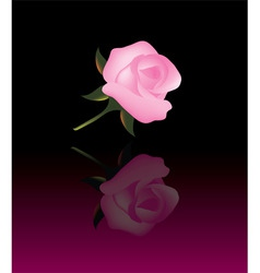 abstract background with pink rose vector image