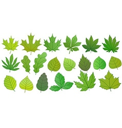 Different green summer leaves collection leaves vector