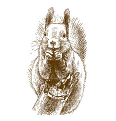 Engraving of squirrel vector