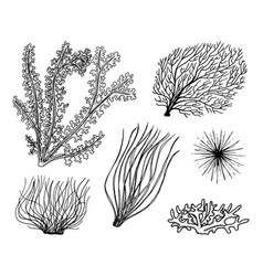 marine plants seaweed vegetable life and food for vector image