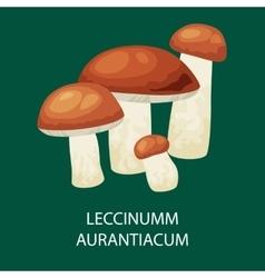 Mushroom leccinum aurantiacum isolated vector image