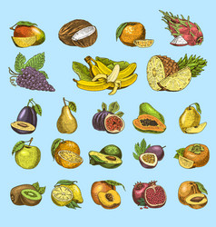 Set of hand drawn engraved fresh fruits vector