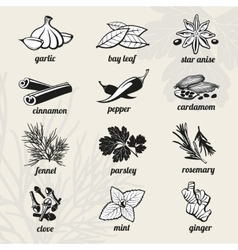 Spice icons set vector