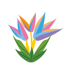 bird of paradise flower spring vector image