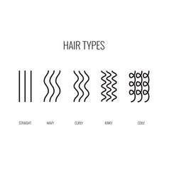 A hair types chart vector