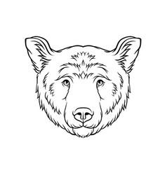 Black and white sketch of bears head face of wild vector