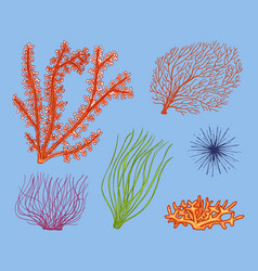 Marine plants seaweed vegetable life and food for vector