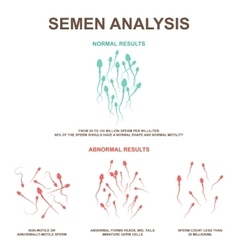 Normal and abnormal sperm vector