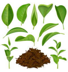 Realistic tea leaves set vector