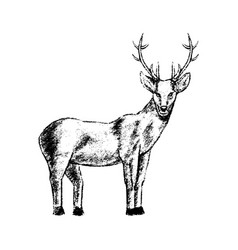 deer icon grunge style vector image