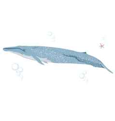 blue whale realistic flat vector image vector image