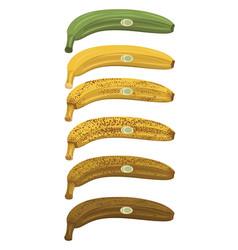 Banana ripening vector